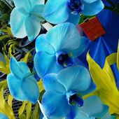 Exotic Blue Orchids