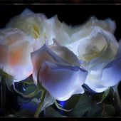 White roses in the dark