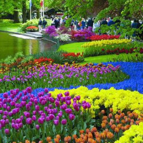 Amsterdam Tulip Garden