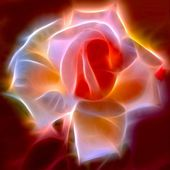 A gorgeous fractalised rose