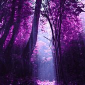 Purple Forest, China