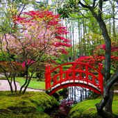 Japanese garden in Clingendael Park, Holland