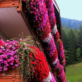 Flower balconies in Trentino, Italy