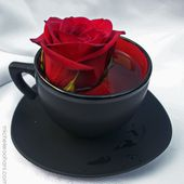 Red Rose in a Black Tea Cup