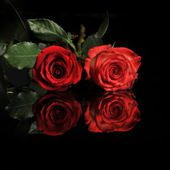 Red roses...