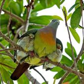 Bird with nestlings