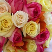 White, yellow and pink roses