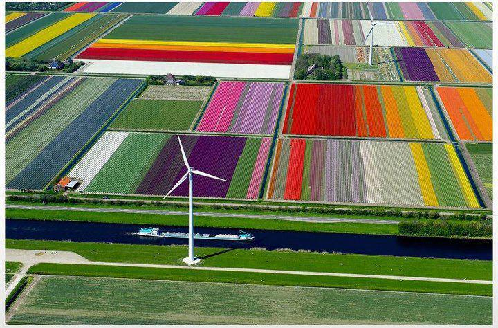 Majestic Tulip Farm