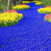 Keukenhof Garden, The Netherlands
