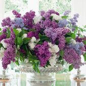Huge bunch of lilac