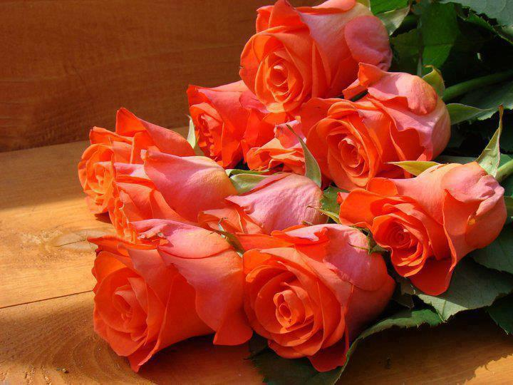 Gorgeous orange roses