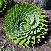 Awesome Succulent