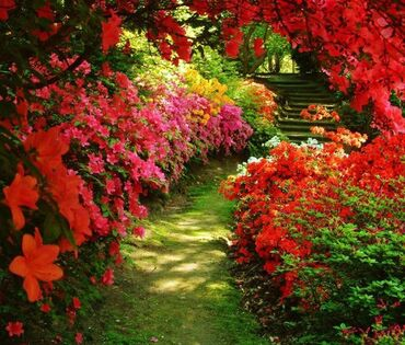 Beautiful 'tropical' garden path