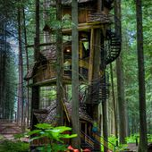 British Columbia's Tallest Tree House