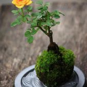 Great Bonsai