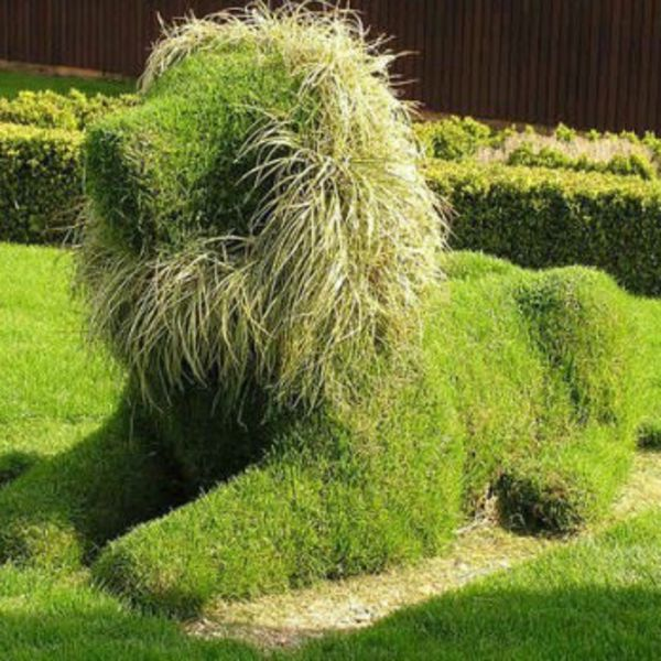 HD wallpapers lion topiary