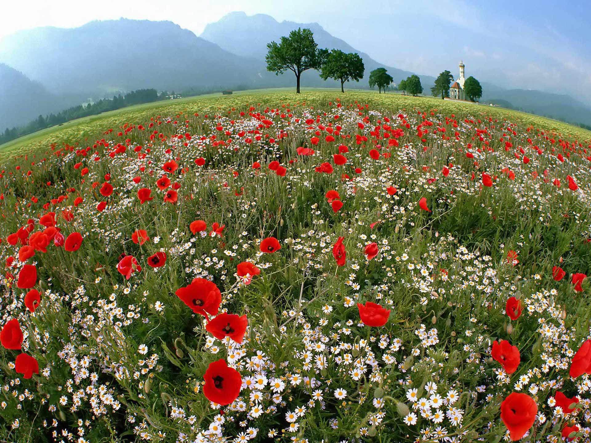 Цветы растут в поле фото