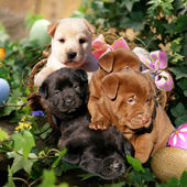 Cute Easter Puppies