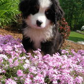 Adorable pup loves flowers!