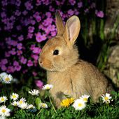Adorable bunny loves flowers