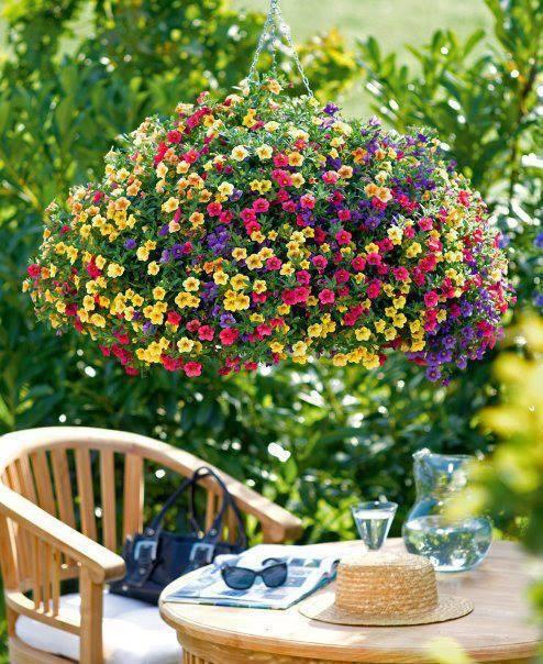Hanging Flower Basket Maintenance : Hanging basket maintenance