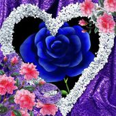 Blue rose in my heart