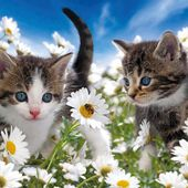 Two Cute Kittens Look at Bee