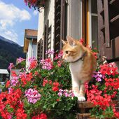 Adorable Kitty Smells Flowers