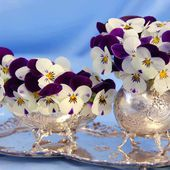 Purple and White Pansies in Silver