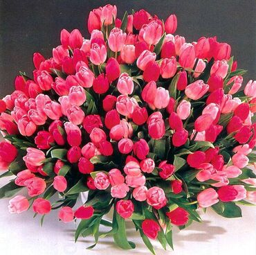 Huge bunch of red and pink tulips
