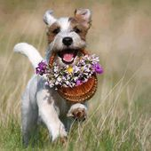 Puppy bringing flowers for you!