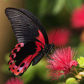 What a beautiful butterfly!