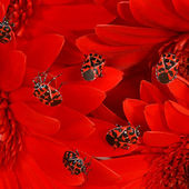 Red Flowers with Lady Bugs
