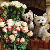 Two cute pups love roses