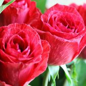 'Red Intuition' is 'Delstriro' rose