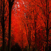 Red autumn trees, Portugal