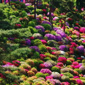 Azalea bushes at Shiofune Kannon Temple