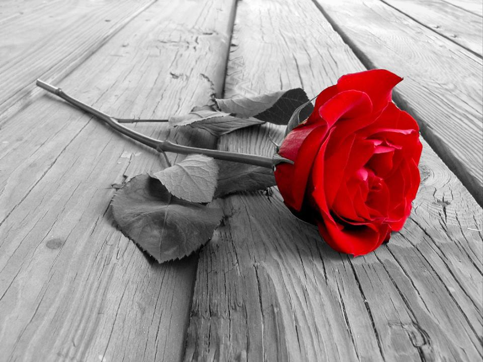 Single Red Rose on Wooden Boards