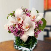 Orchids in the squared jar