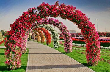 Flowered Arches