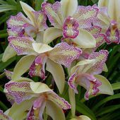 What lovely orchids!