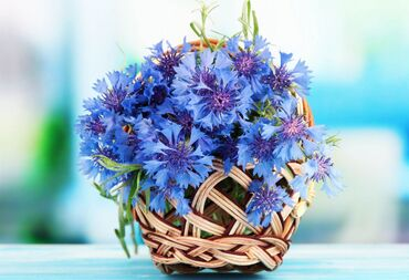 Basket of beautiful cornflowers