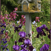 Moss Covered Birdhouse in an Iris Garden