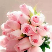Bunch of tender pink roses