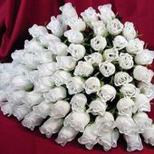 Huge bunch of white roses