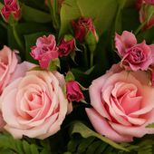 Garden pink roses and buds
