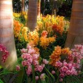 Palm Trees in an Orchid Garden