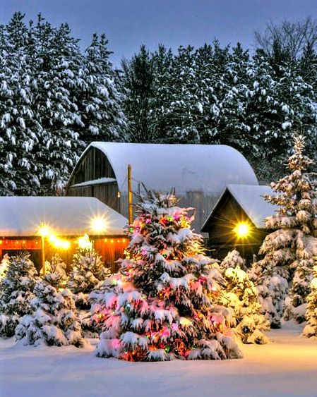 Christmas Tree Farm, Michigan