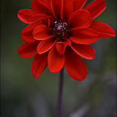 Awesome red flower