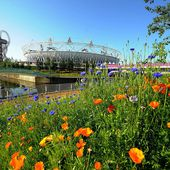 Wildflower fields in London for the 2012 Olympics